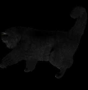 cat_PNG1615